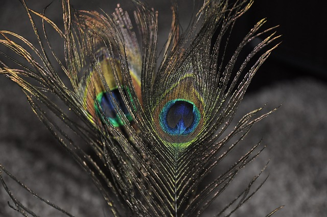 Peacock Feather, Macro, Feather, Peacock, Colorful