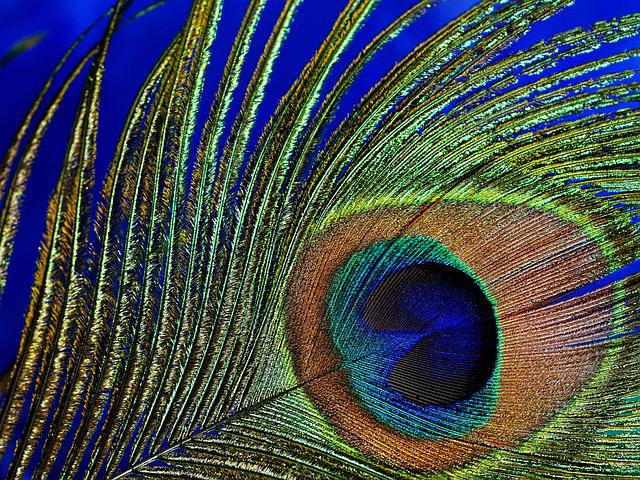 Peacock Feather, Macro, Peacock, Bird, Spring, Close