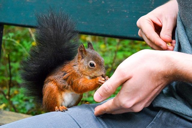 Squirrel, Feed, Food, Nut, Eat, Peanuts, Tree, Cheeky