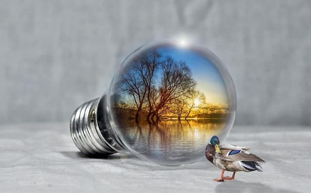 Lake, Sunset, Duck, Pear, Light Bulb, Nature