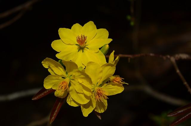 Leopard, Flower, Pear, Spring, The Lunar New Year
