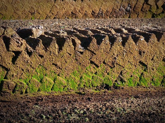 Peat, Potting Soil