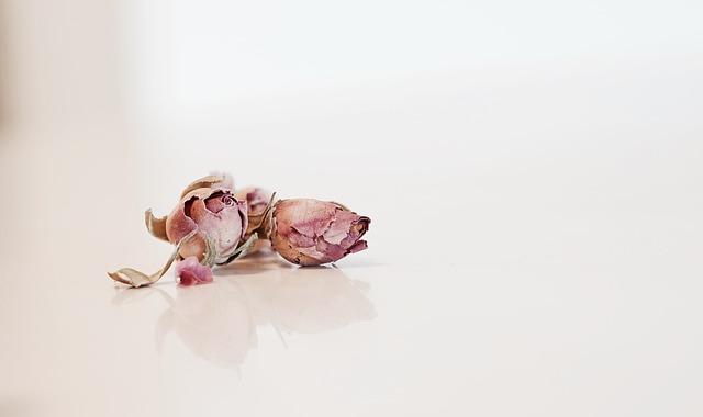 Rose, Pedal, Pink, Flower, Love, Valentines, Plant