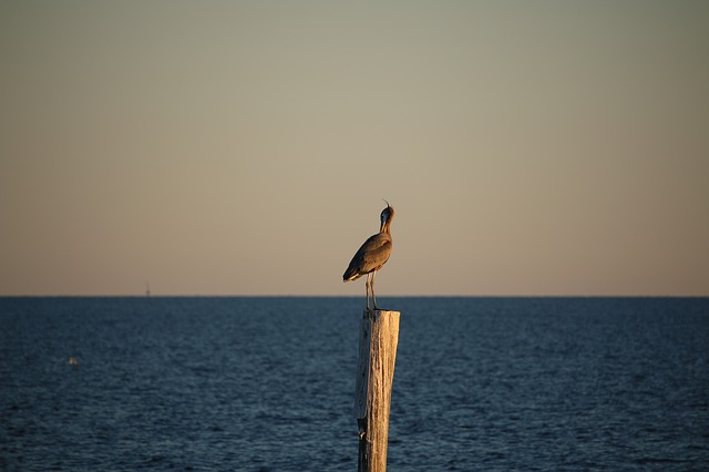 Bird, Gulf, Gulf Of Mexico, Ocean, Pelican, Post, Sea