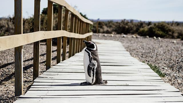 Penguin, Animal, Beach, Bird