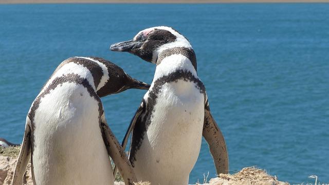Penguin, Animal, Beach, Marine Life