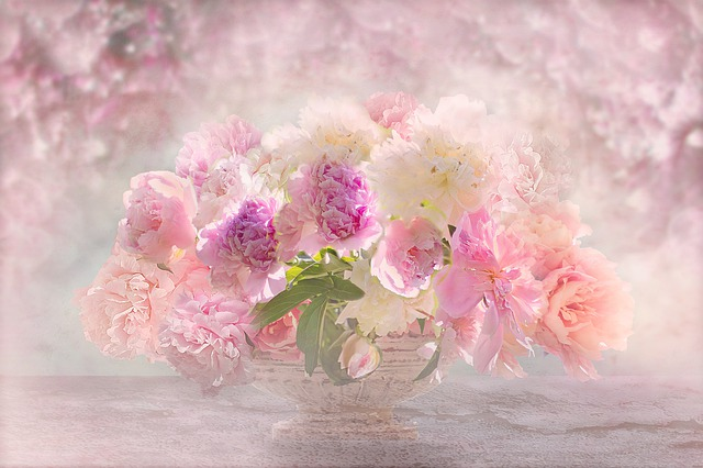 Nature, Landscape, Flowers, Peonie, Peony, Roses, Pink