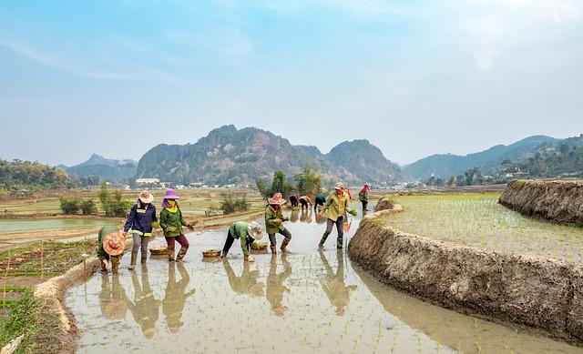 Farmers, Rice, Fields, Country, Sapa, People