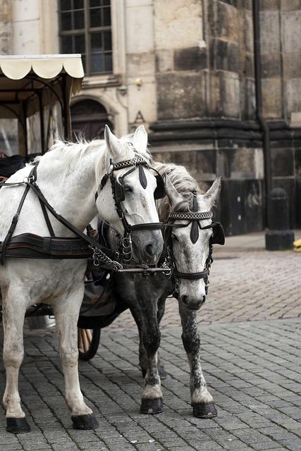 Street, People, Dresden, Horse