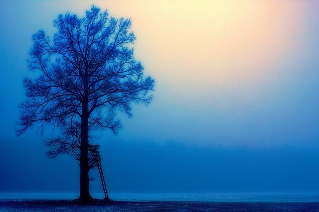 Nature, Sky, Dawn, Sun, Tree, Perch, Blue, Fog, Foggy