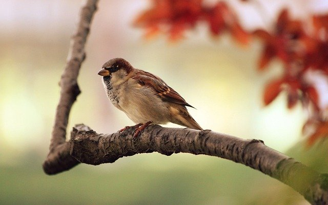 Sparrow, Bird, Branch, Twig, Perched, Animal, Chirp