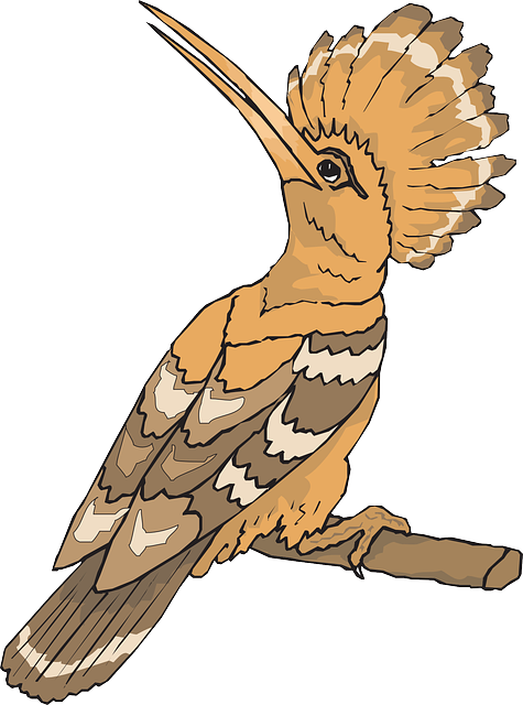Bird, Hoopoe, Looking, Back, Sight, Feathers, Perched