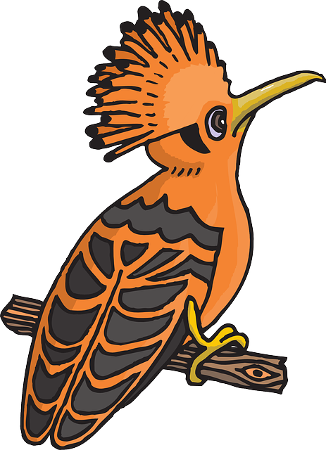 Black, Orange, Bird, Branch, Wings, Feathers, Perched