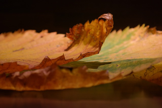 Elm Leaves, Edge, Perforation, Withered, Dry