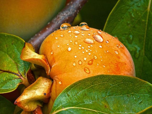 Rosewood, Khaki, Fruit, Autumn, Persimon, Drops