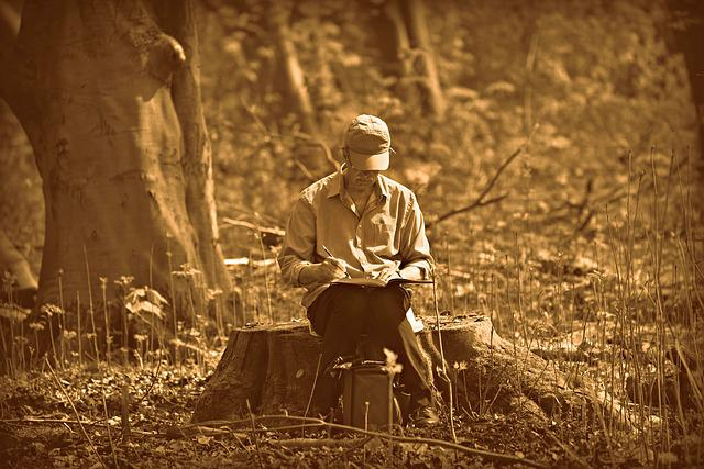 Man, Person, Artist, Drawing, Sitting, Tree Stump