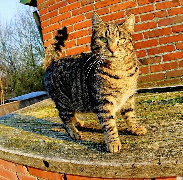 Cat, Mammal, Portrait, Animal, Cute, Perspective