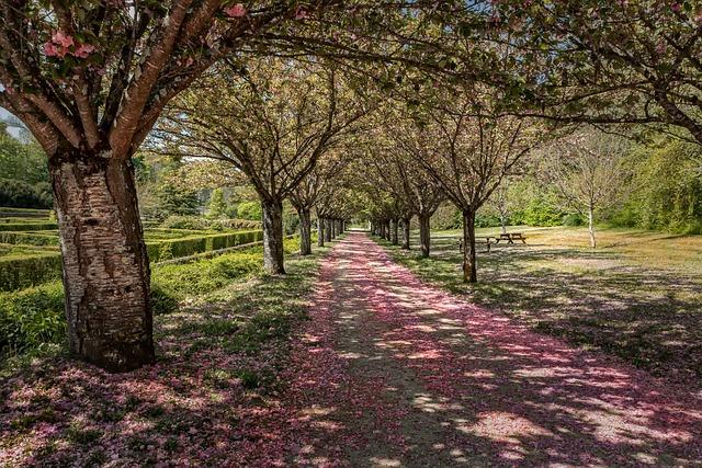 Tree, Landscape, Nature, Flower, Plant, Perspective