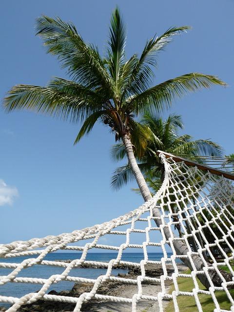 Hammock, Palm Tree, Perspective, Coconut Tree, Beach