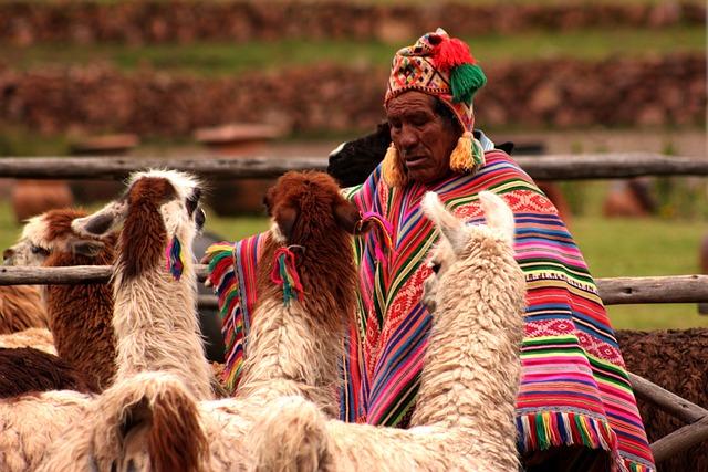 Peru, Llama, Animals, Redneck, People, Humanity, Human