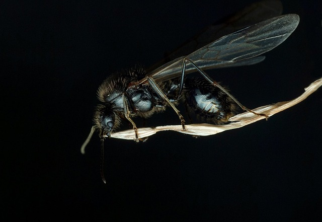 Insect, Pest, Fly, Wing, Animal