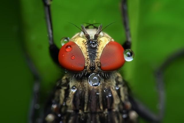 Housefly, Insect, Macro, Pest, Animal, Eye