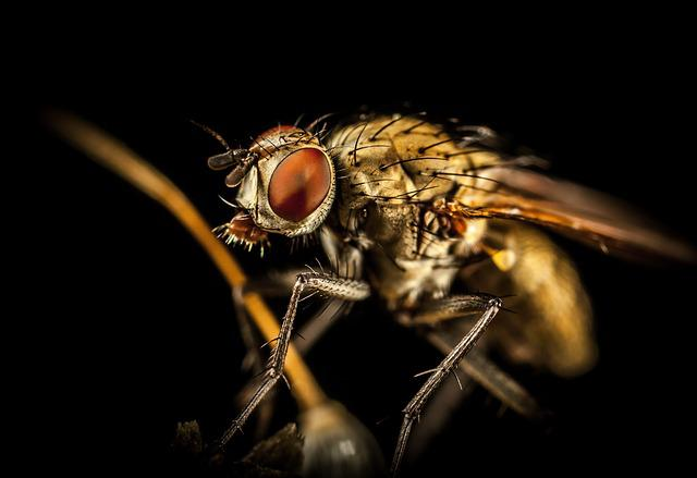 Insect, Pest, Fly, Nature, Macro
