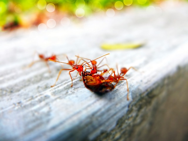 Ants, Close-up, Insects, Little, Macro, Pest, Tiny