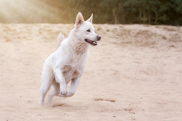 Dog, Animal, Pet, Action