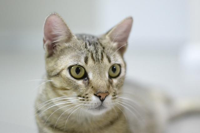 Cute, Cat, Pet, Kitten, Looking, Domestic, Adorable