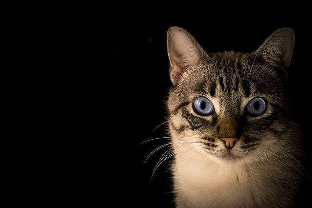 Cat, Pet, Animal, Look, Feline, Animals, Rest, Kitten