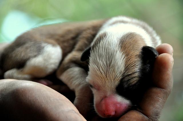 Mammal, Cute, Baby, Animal, Little, Newborn, Puppy, Pet