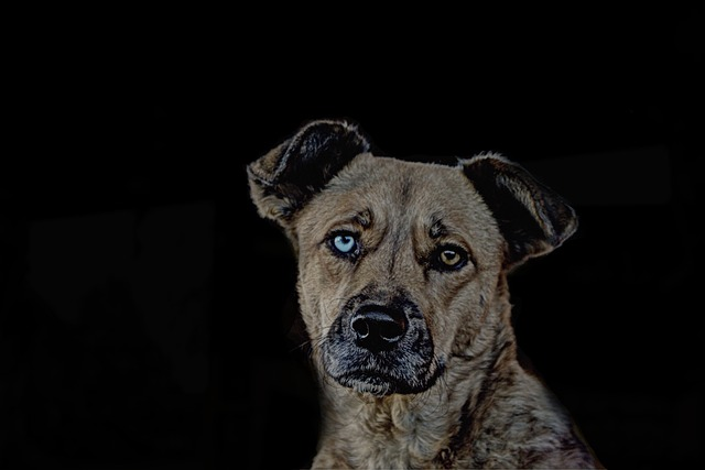 Animal, Dog, Image Editing, Pet, Face, Blue, Eyes