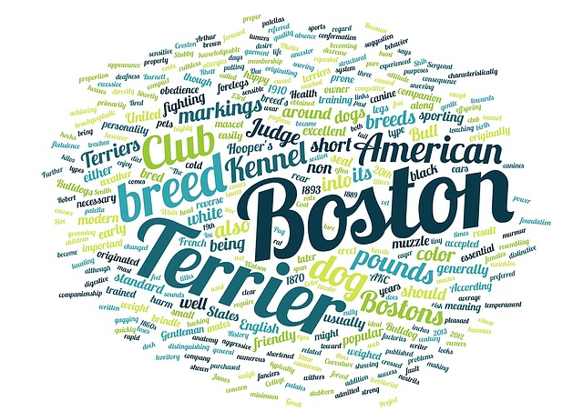 Word Cloud, Boston, Terrier, Pet, Animal, Dog Breed