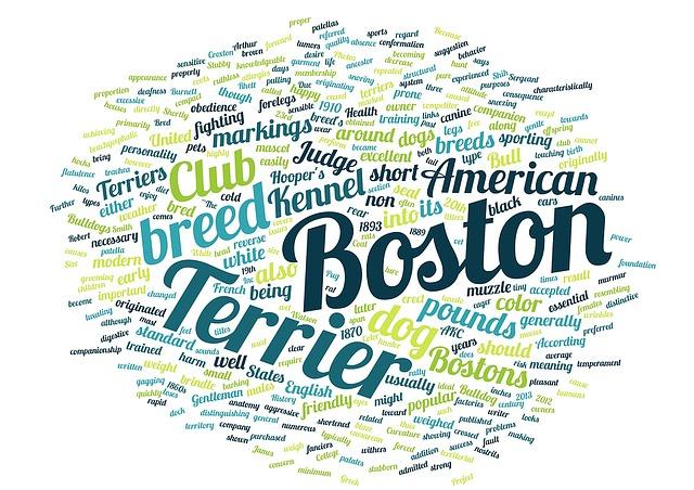 Word Cloud, Boston, Terrier, Pet, Animal, Dog Breed