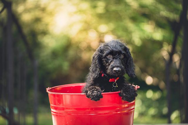 Adorable, Dog, Bucket, Animal, Canine, Cute, Pet, Puppy