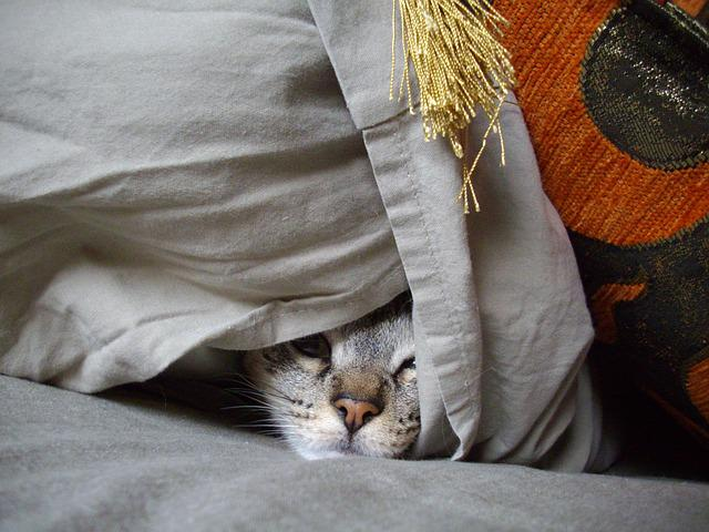 Hideout, Cat, Pet, Feline, Kitten, Look, Camouflage