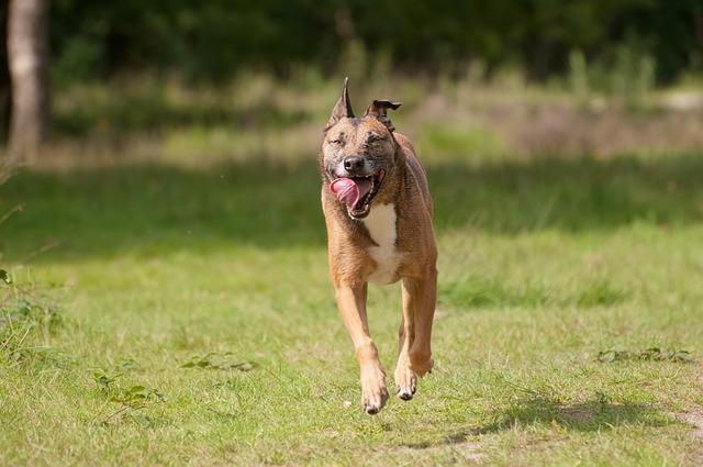 Mammals, Dog, Animal Kingdom, Canidae, Field, Pet