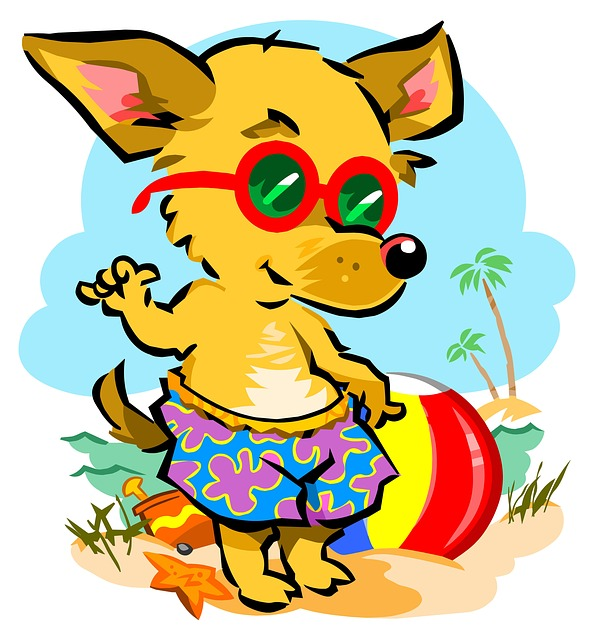 Beach, Chihuahua, Dog, Pet, Animal, Summer, Canine