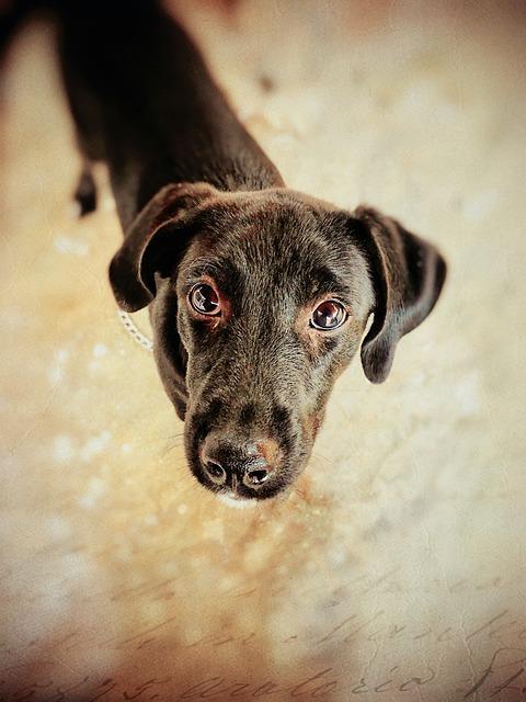 Dog, Cute, Animal, Pet, Canine