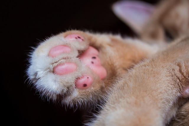 Cat, Paw, Pet, Mieze, Paw Print, Cute, Animal