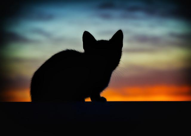 Cat, Animals, Backlight, Pet, Cats, Pets, Nature