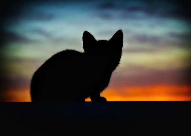 Cat, Animals, Backlight, Pet, Cats, Pets, Nature