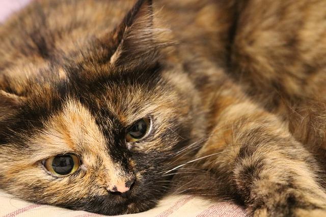 Cat, Pets, View, Pet, Eyes, Home, Beasts, Cute