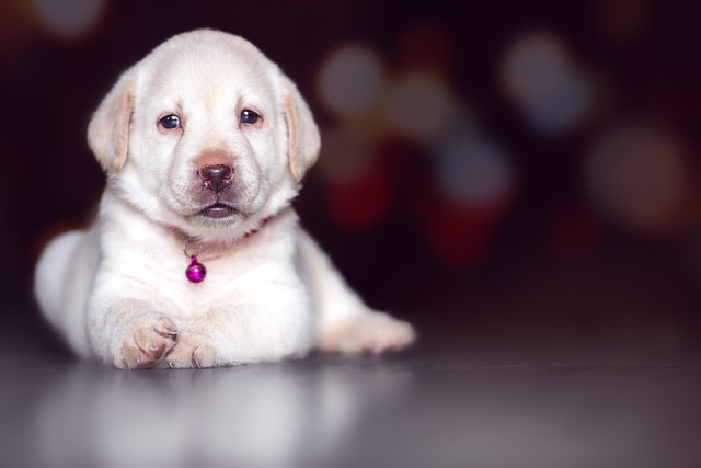 Dog, Cute, Pet, Mammal, Canine, Puppy, Animal, Adorable