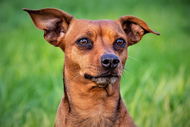 Animal, Dog, Cute, Pet, Mammal