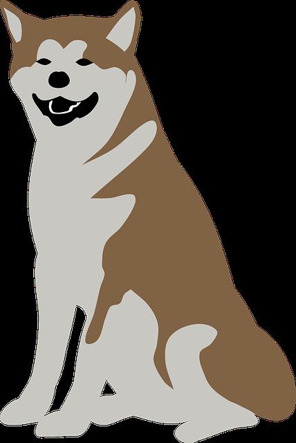 Animal, Dog, Malamute, Pet