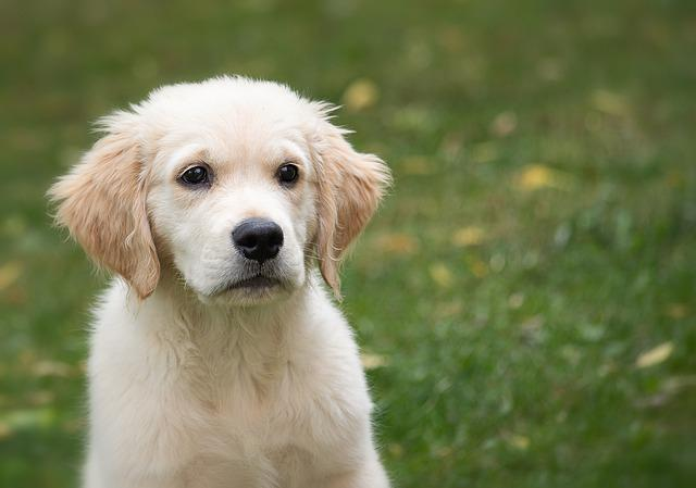 Dog, Animal, Puppy, Pet, Mammal, Animal World
