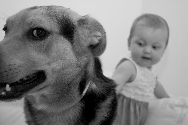 Dog, Bimbo, Animal, Pet, Beast