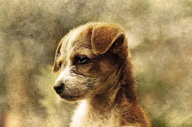 Dog, Animal, Art, Abstract, Pet, Vintage, Design